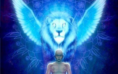 8-8 Lions Gate Activations